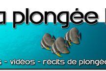 Le blog de la plongée Bio / Le blog de la plongée bio par Anthony LEYDET ! De la plongée, de la bio, mais aussi des voyages, du matériel, des photos et des vidéos.