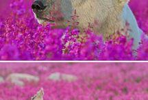 lední medvědi a medvědi