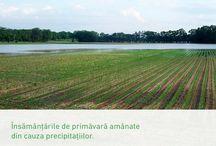 Sfaturi agricole