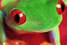 Frog / FROG=Faithfully Rely on God / by Melinda Green