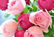 vår blomster