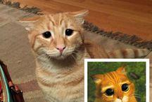 Adorable kitty's