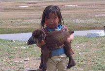 animali bambini