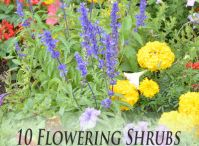 Garden- Growing Flowering  Plants