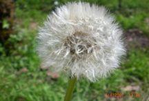 Flower / Fotografiamo la flora