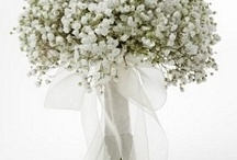 Gypsophila / by Philosophy Flowers Official