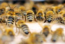 Bee Care and Keeping  / by Linda Humphrey