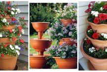 Növények Virágok