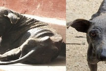 RESCUE ANIMALS - THEY NEED US / www.DogtailShop.com