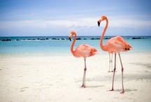 Aruba Favorites