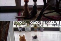 Gatos, Cats, Gaticos