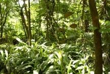 """El pulmón de Medellín cumple 40 años / El pasado 19 de abril, el Jardín Botánico cumplió sus 40 años. La celebración fue por lo alto y conto con grandes personajes de la ciudad como el ex-alcalde Alonso Salazar y el gobernador de Antioquia Sergio Fajardo. Durante varios años el Jardín Botánico vivió entre muros grises, encerrando la tranquilidad y el verde ambiente que ahora despierta las más ocultas sensaciones permitiendo un acceso visible desde todo enfoque. Jardín Botánico """"Orgullo de la ciudad, Herencia para nuestros hijos"""""""