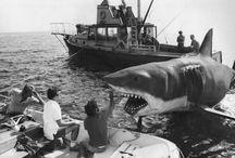 sharks and sea