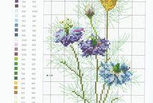 Цветы Ботаника
