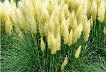 Balkonpflanze gelb