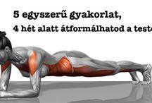 edzés, egészség