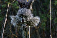 OWLS - amazing / by Doka Pace