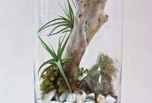 piante terrarium