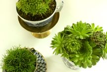 Tiny Plants - Succulents