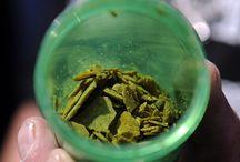 Concentrados Cannabis