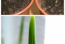 Növények - plants