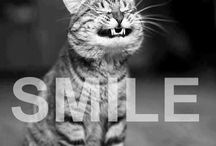 Animals That Smile / Do animals smile? Yes they do! Check out some cute smiling animals