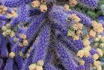 Çiçekli-kaktüs