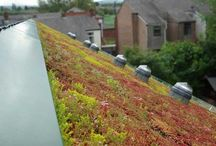 Green Roofing / Images and information about green roofing