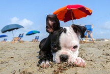 Beach Dogs of Galveston