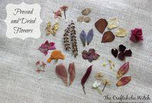 Craft Supplies from My Garden!
