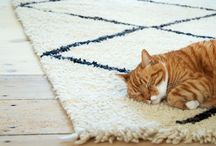 Cats on rugs