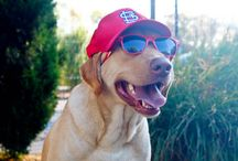 Let's Go St. Louis Cardinals!  / by Kennelwood Pet Resorts