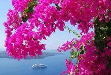 Manzara ve çiçekler