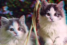 3D Anaglyph Animal Photographs / These 3D pictures can be viewed using Red/Cyan 3D glasses. The images come from The Present Shops range of Faithful Friends 3D wall art. These pictures can be bought as lenticular 3D posters that can be viewed in 3D without the use of special glasses. The depth has to be seen to be believed.  Themes include dogs, cats, horses, wildlife. nostalgia and Scottish.