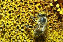 L'oro del Miele