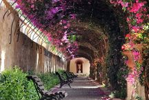 Garden arches and paths