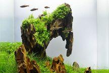 Aquarium (nano)