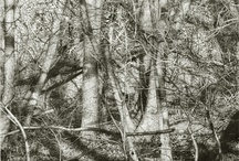 Landscape / Painting and drawing; photography filed elsewhere. / by Barbara Weitbrecht