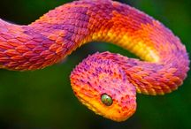 Beautifully Colored Animals / Mezmorizing sharp colors. Look at the beauty in the world. / by Klaressa Hobbs