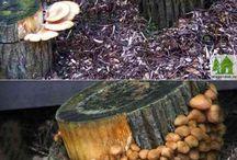 Как вырастить грибы на даче