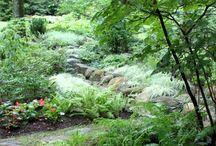 Garden Dreaming...