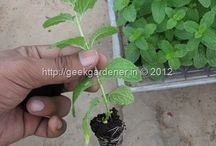 Grow cuttings