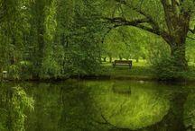 Greens / by Kelly Yale