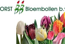 G-Fresh grower Borst Bloembollen / The passion for flowers and customer satisfaction are the biggest motivation for Borst Flower Bulbs to grow the best tulips and that's why they share the vision of G-Fresh, to deliver the flowers as fresh and quickly as possible to the customer.