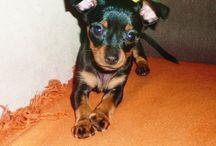 Filip <3  / My sweet dog *-*