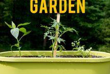 Container Gardening Musings