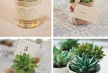 Succulents for favours