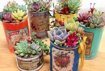 succulents in tin cans