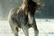 Big is beautiful / Amazing beautiful draft horses / by Jenny Melton Hudson