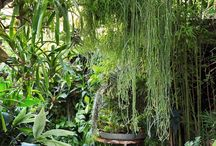 Tropical Courtyards